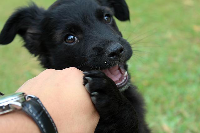 jak zabavit psa doma